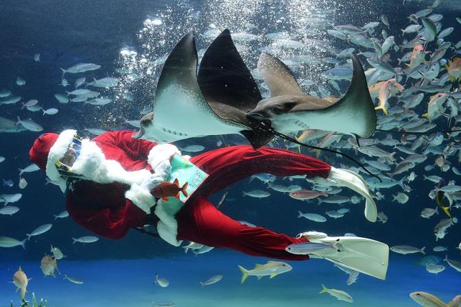 christmas-aquarium